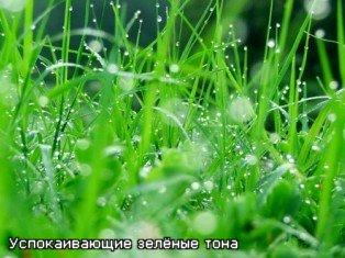 Слайды успокаивающие зеленые тона